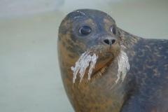Seal & Seal Pups